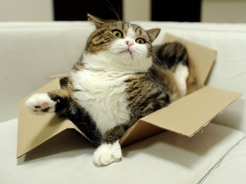 """Me to Dumpling: """"with a lot of extra kitty food, and a little bit of patience, you could be just like Maru one day."""""""