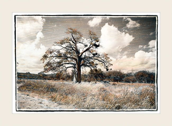 Summer Baobab - Marlene Neumann Fine Art Photography  www.marleneneumann.com  neumann@worldonline.co.za