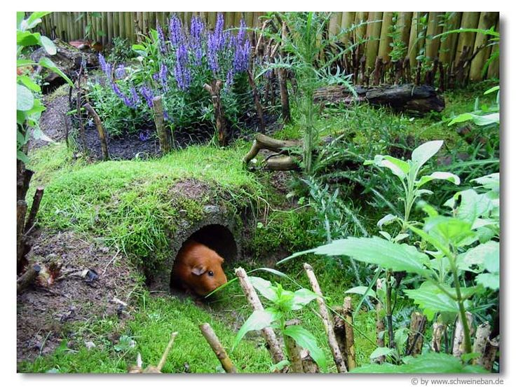 An imaginative guinea pig enclosed garden. Picture only. Make sure all enclosures are secure and the little buggers can't escape if you leave them unattended for any amount of time.
