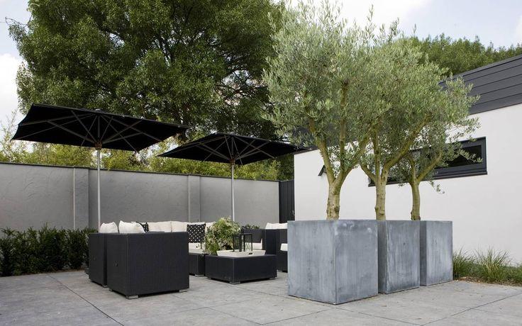 olive trees in large contemporary concrete planters - Fotos van diverse aangelegde tuinen - Martin Veltkamp Tuinen