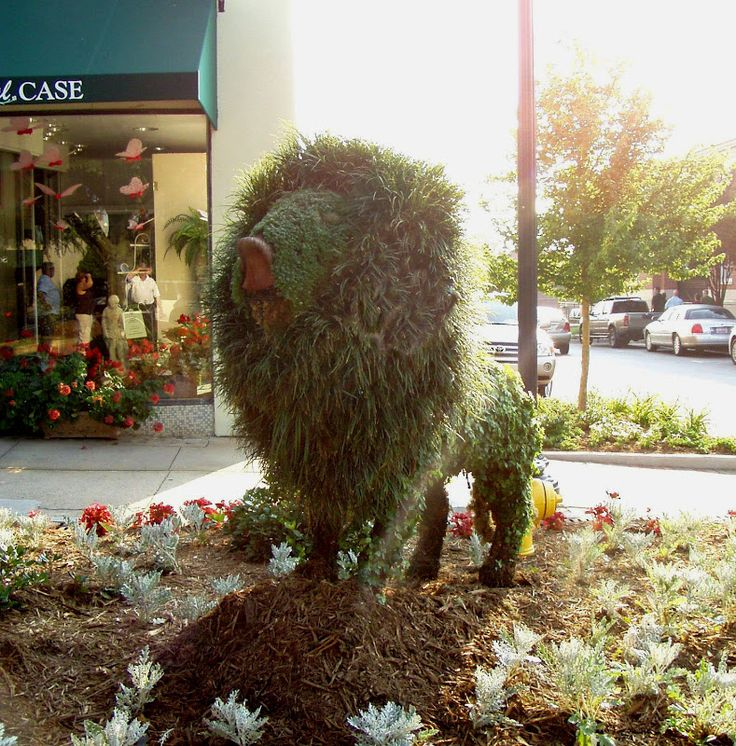 Amazing Topiary: 19 Best Images About Amazing Topiary Art On Pinterest