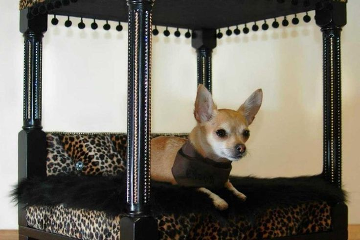 Awesome-Dog-Furniture-Design-Ideas ~ http://www.lookmyhomes.com/smart-in-choosing-dog-furniture/