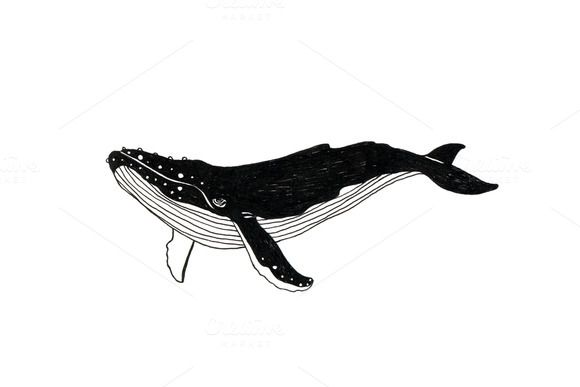 Check out Whale illustration + paper texture by Michlomop on Creative Market