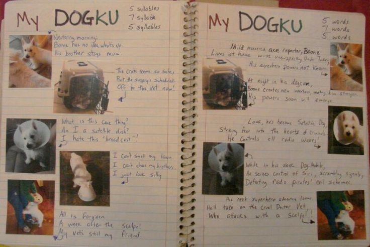Always Write: DOGKU by Andrew Clements inspires a new writer's notebook page from me.  Can't wait to share this with my students!  Here's a link to my online lesson: http://www.corbettharrison.com/free_lessons/Vocab-Haikus.htm#3