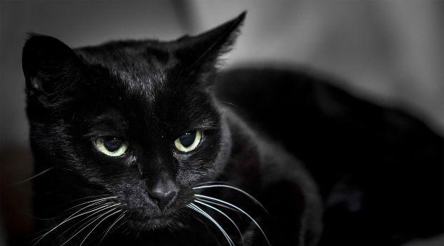 Black Cat Muzzle Eyes Animal Wallpaper Cat Wallpaper Black Cat