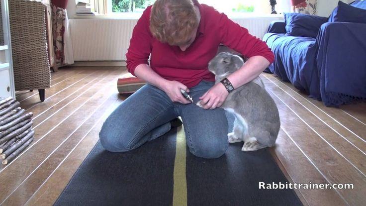 Nagels knippen bij mijn konijn. Diesel mijn Franse Hangoor konijn geeft mij vrijwillig zijn poot, zodat ik zijn nagels kan knippen. -----------   Cutting my rabbit's nails  Diesel my french lop, gives his paw voluntarily so i can cut his nails