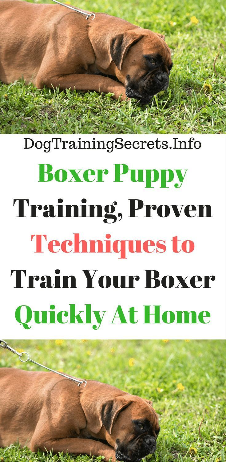 House Training A Boxer Puppy Training For Boxers Dog Clicker