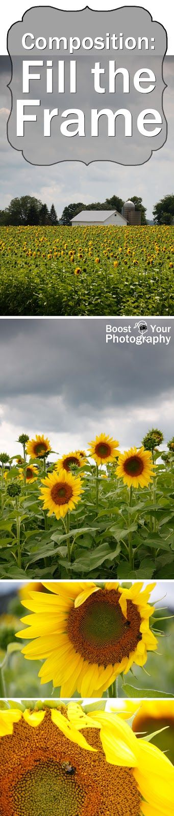 Composition: Fill the Frame - sunflowers example   Boost Your Photography