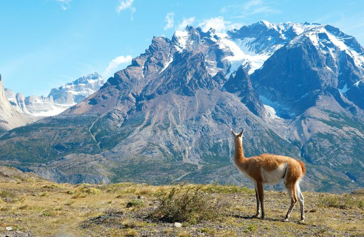 Experience the natural wonders of Torres del Paine, renowned for its mountain peaks, glaciers, turquoise lakes, rushing rivers, and thunderous waterfalls.