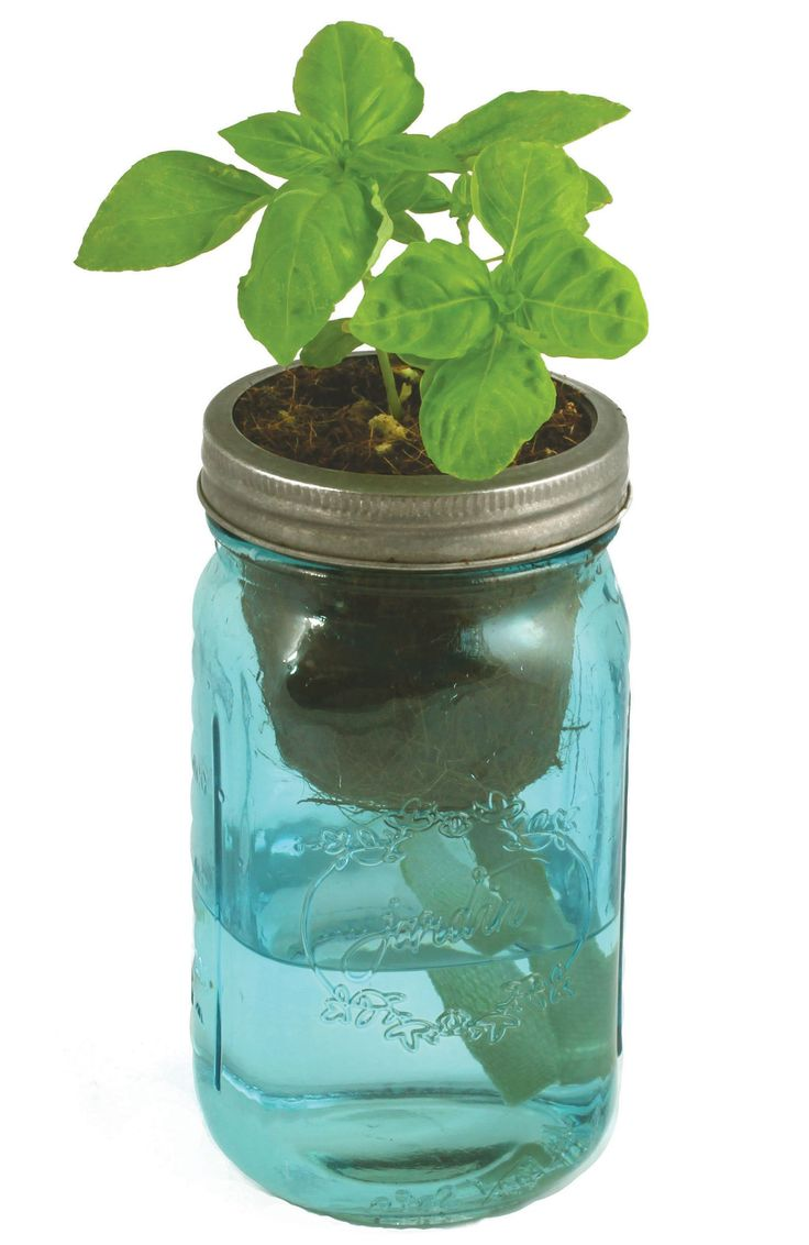 The big list of self watering planters for stylish gardening anywhere - Herb Garden Kit Self Watering Indoor Planter With Organic Basil Seeds Simple Set