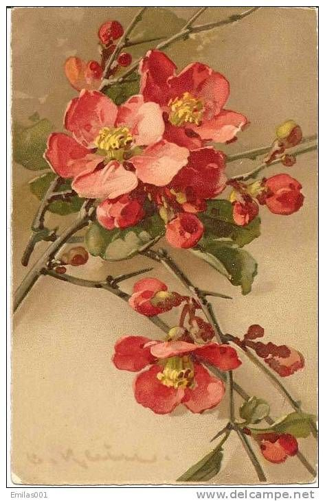 Catherine Klein (Кэтрин Клейн, 1861 – 1929), открытки