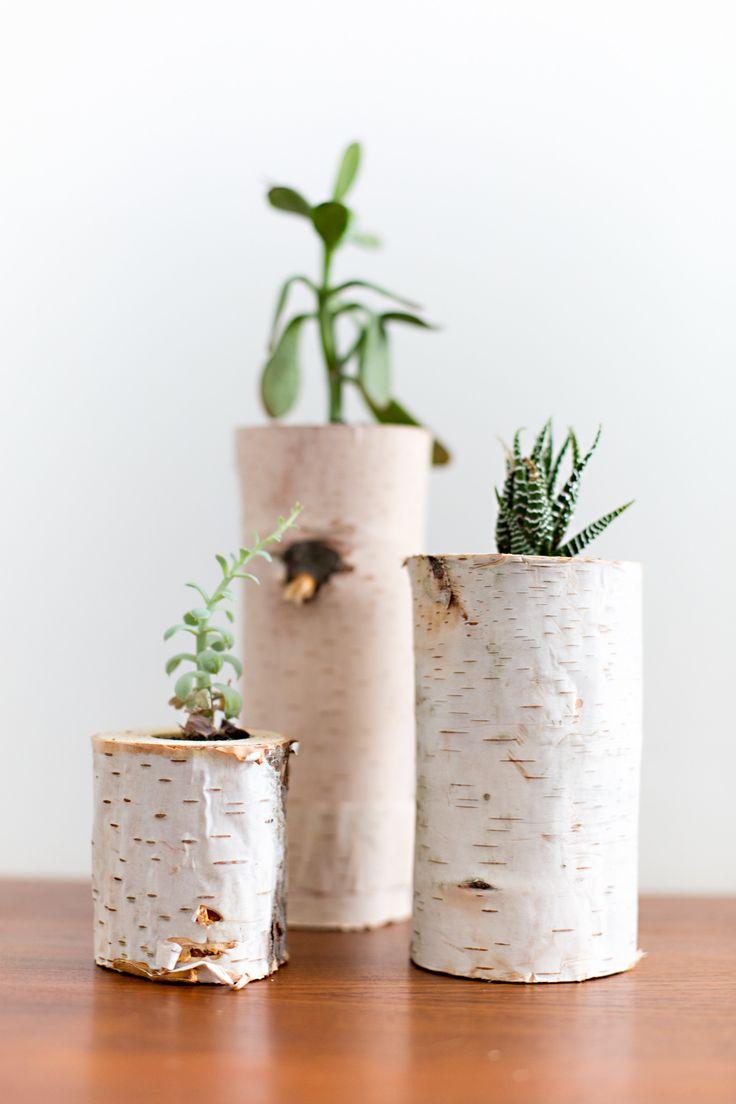 Aus Birkenästen ergeben tolle Pflanzengefäße für Succulenten machen! #pflanzenfreude #succulents