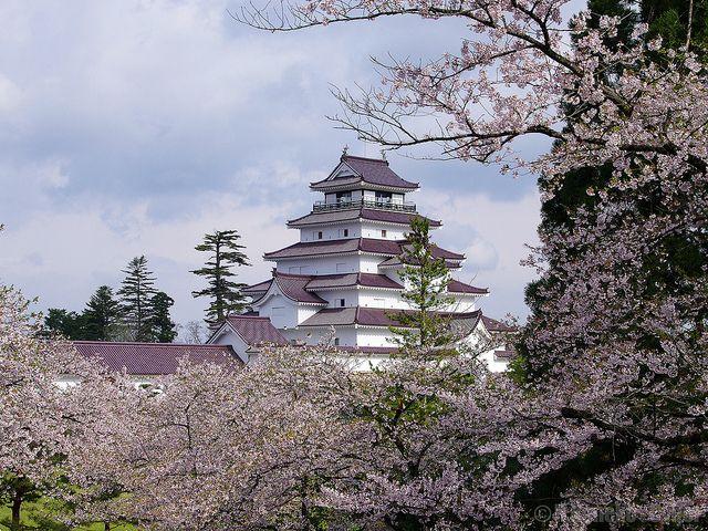 桜と若松城 (Aizuwakamatsu Castle with Cherry Blossoms)