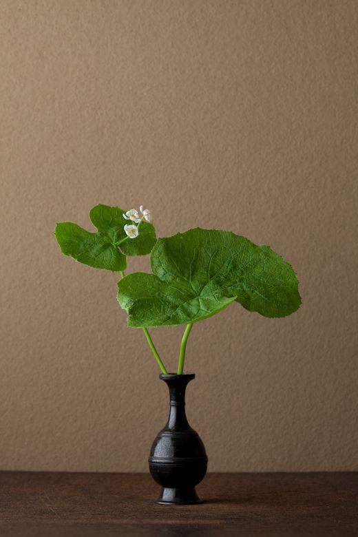 2012年6月9日(土)  吐息のような花はすぐに散ってしまいます。瑠璃色の実も美しい。  花=山荷葉(サンカヨウ)  器=古銅請来形華瓶(鎌倉時代)