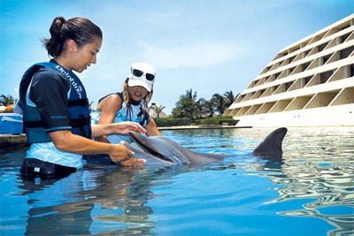 Delphinus Trainer for a Day