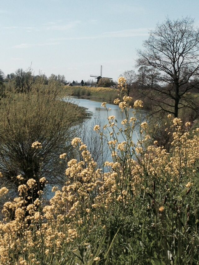 Spring in the Netherlands. Beautiful view in the Betuwe.