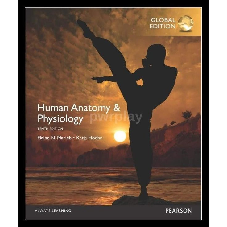 Fundamentals of Anatomy and Physiology 4th Edition $19.99 ...