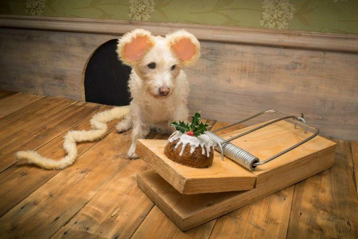 Fotograaf laat hond figureren in hilarische kerstkaarten