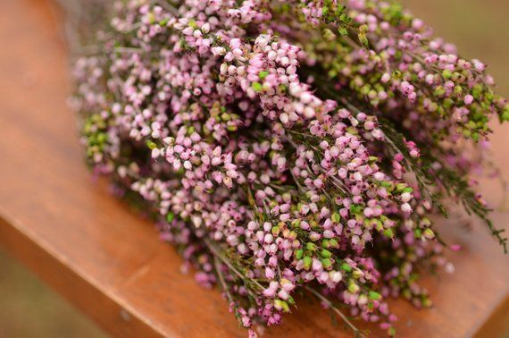 Bunch Of Preserved Pink Heather Pink Heather Pink Wedding Etsy Scottish Flowers How To Dry Basil Spring Wedding Flowers