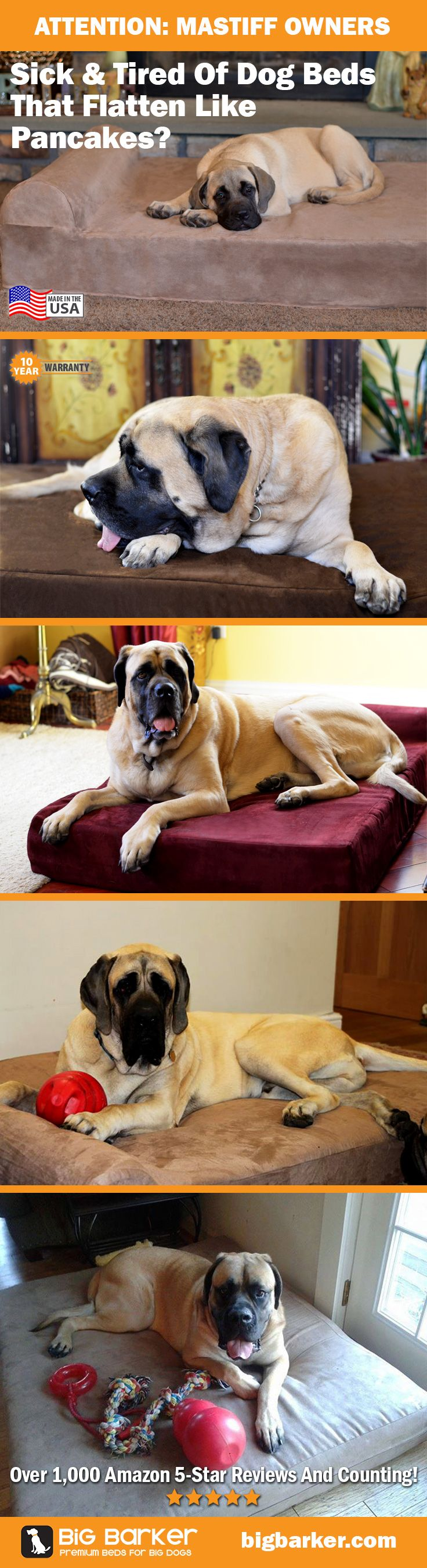 Mastiff Bed!  The mastiff bed in this image is a Big Barker, available at http://bigbarker.com - 10 year warranty, guaranteed not to flatten.