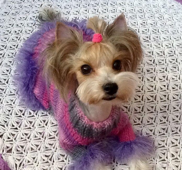 Йорки, одежда для йорков, одежда для собак, Аксессуары для собак, платье для Йорка, комбинезон для Йорка, свитер для йорка, вязаная одежда для собак
