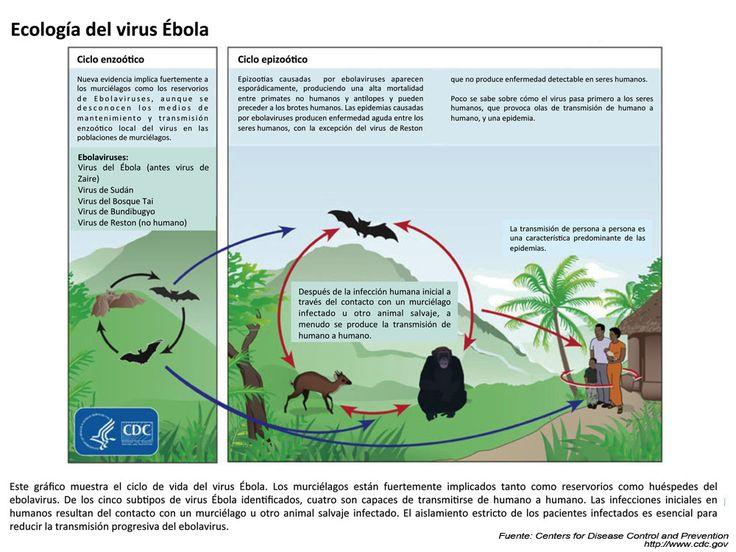 ECOLOGIA DEL VIRUS EBOLA
