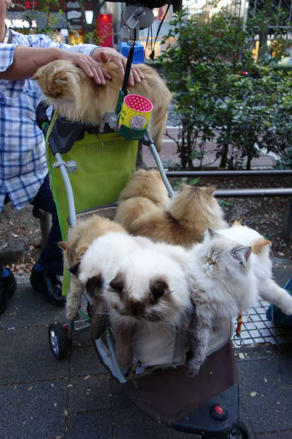 I love this!!! Cat man from Kyushu walks nine cats in a stroller, draws crowds in Tokyo