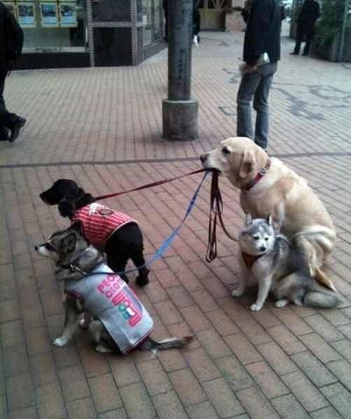 Awww- what a good dog! - For more visit http://www.pinterest.com/MarvinPearce/