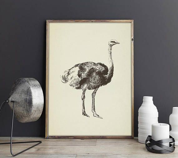 Ostrich Print, Ostrich Poster, Ostrich Art Printable, Vintage Large Prints Poster Digital Drawing Engraving, Bird Home Decor Gift
