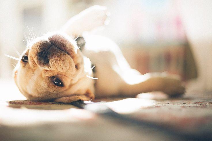 Best Pet Insurance Reviews of 2016 - Reviews.com