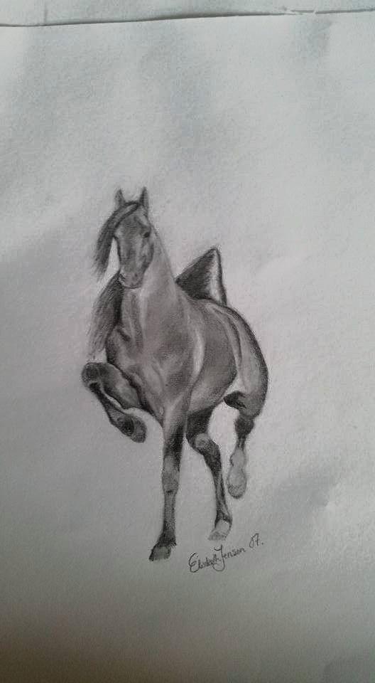 Horse, hest, stallion, mare, hingst, hoppe, show
