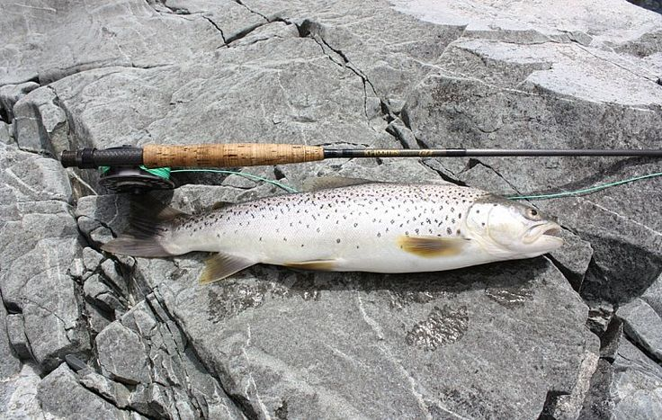 Рыбалка на форель на реке Матаура, Южный остров, Новая Зеландия | Ahipara Luxury Travel New Zealand #новаязеландия #рыбалка #форель #матаура #южныйостров #гид #тур