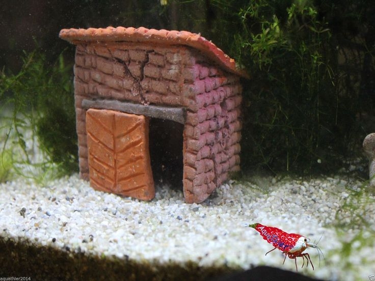 garnelen werkstatt nano haus versteck aquarium fische ebay aquathier. Black Bedroom Furniture Sets. Home Design Ideas