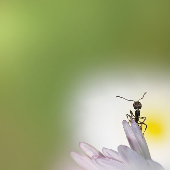 best photos 2 share: Creative Macro Photography Ideas  (more ideas at the link)