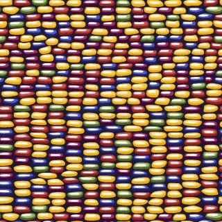 Shop Flint corn fabric by Garigal at WeaveUp - custom fabric