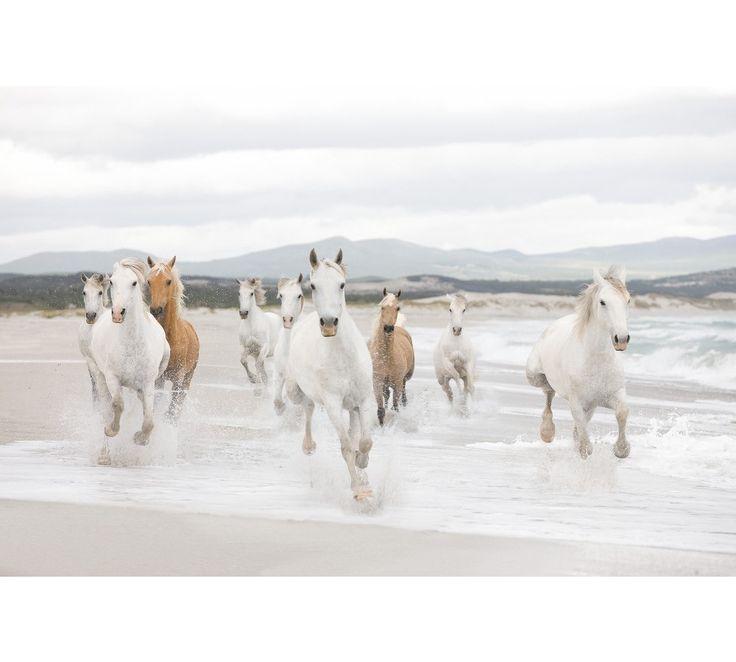 White Horses poszter, fotótapéta 8-986 / 368x254/ - Egész fal méretű poszterek