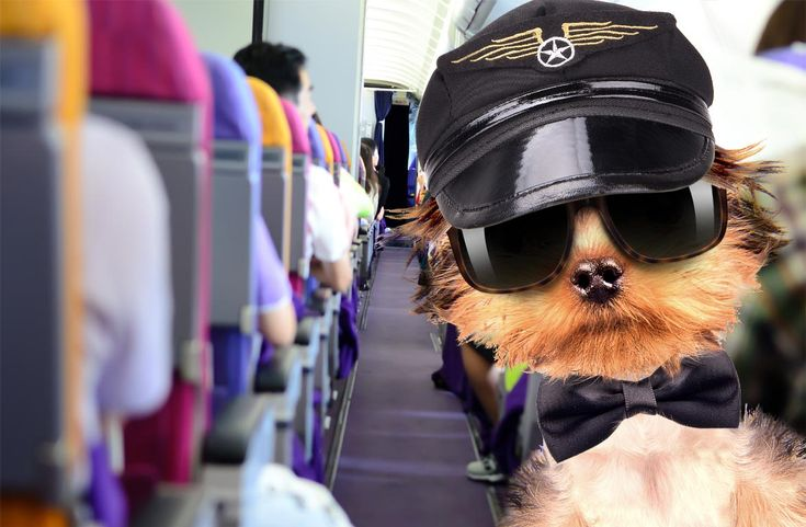 Pet Travel: Best Pet-Friendly Airlines – The Vacation Times