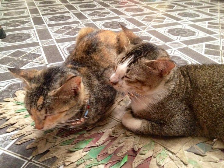 True love life of a cat