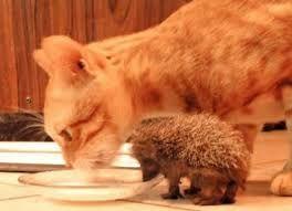 Resultado de imagen para imagenes de gatitos bebes tiernos