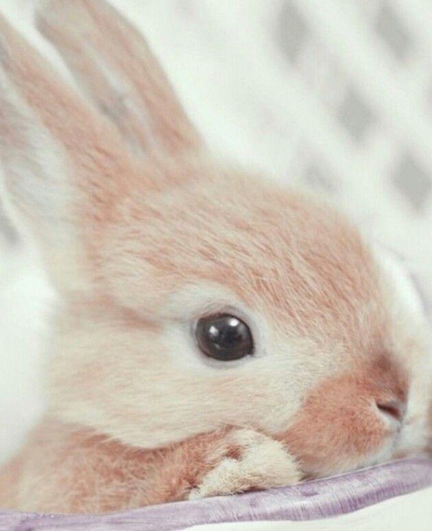 Bunny cuddle
