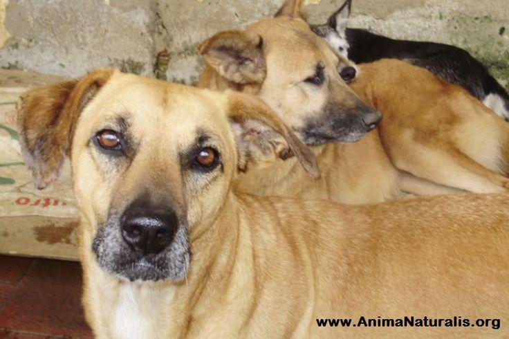 El Gobierno  Riojano y la No protección animal