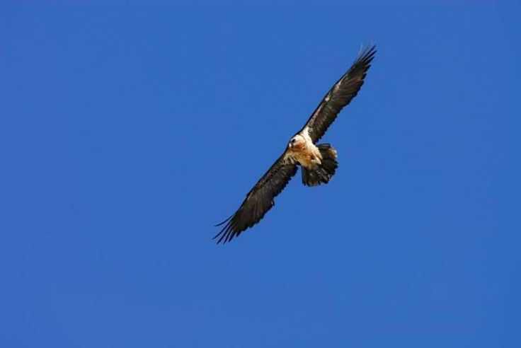 Hotel Les Templiers, Midi Pyrenees. Come and discover the birds of the mountain http://www.organicholidays.com/at/3062.htm