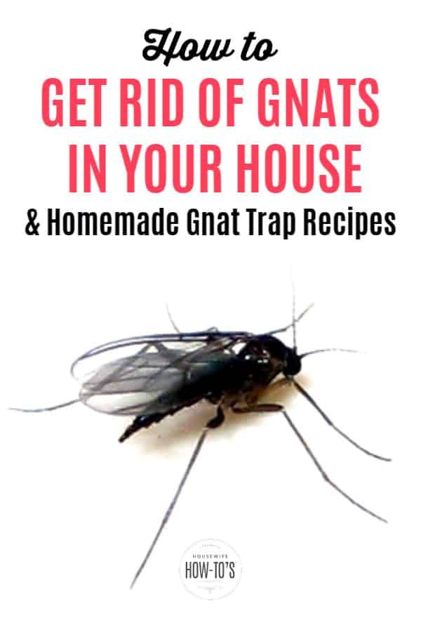 How To Get Rid Of Gnats Drain Flies And Fungus Flies How To Get Rid Of Gnats Gnat Traps Homemade Gnat Trap