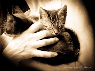 Hands that rescue homeless animals, by Saia Vergara
