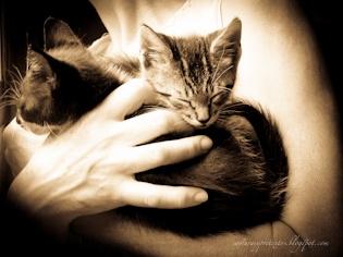 Hands that rescue homeless animals, by Saia Vergara