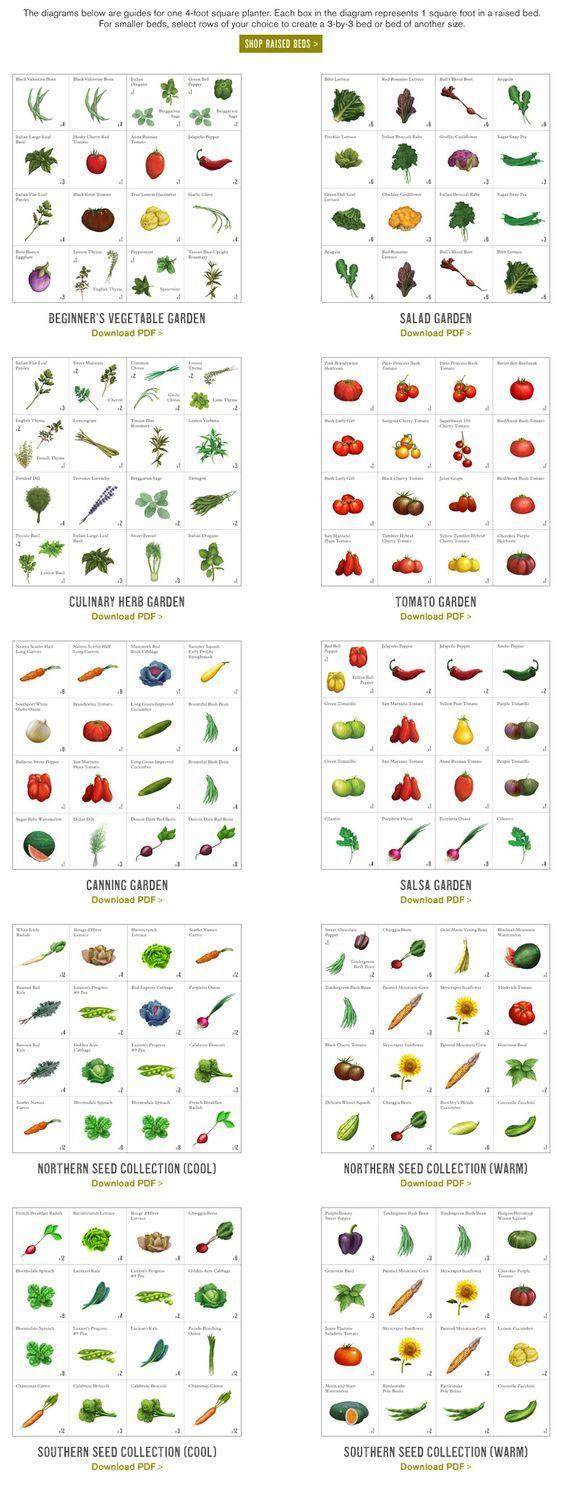 Beginner's vegetable garden, salad garden, herb garden, tomato garden, canning garden, salsa garden, northern and southern seed collections - downloadable pdf charts  #vegetable  #gardening: