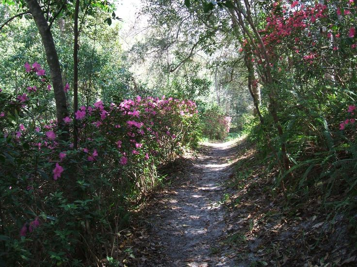 Ravine Gardens Palatka Fl Neighborhood Finds Pinterest Gardens The Great Outdoors And