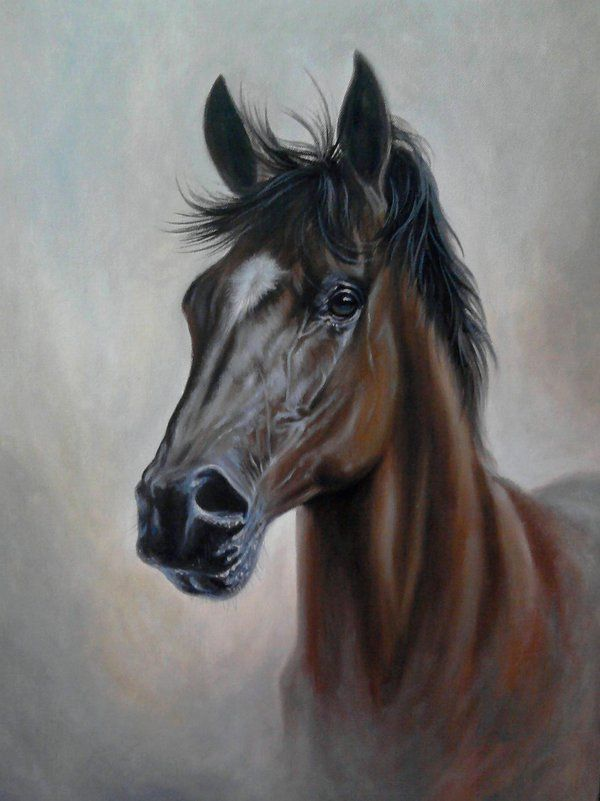 Brown horse by Simon Zoltan by ZoltanSimon on DeviantArt