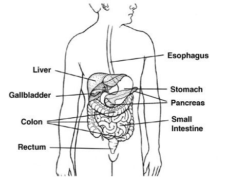 What is bile duct cancer?