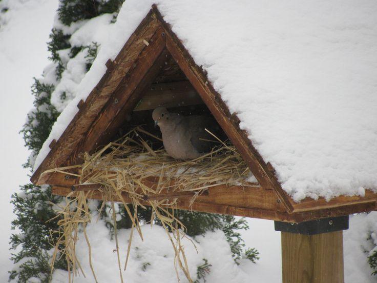 abri d 39 hiver pour oiseaux avec de la paille a l 39 int rieur un refuge appr ci par les oiseaux. Black Bedroom Furniture Sets. Home Design Ideas